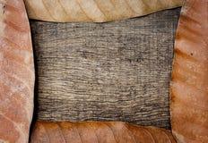 Droge bladeren op oude houten achtergrond met gebarsten Royalty-vrije Stock Foto's