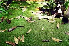 Droge bladerendaling van de tuin Stock Afbeelding