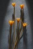 Droge bloem Stock Foto's