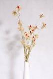 Droge bloem stock afbeelding