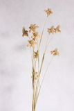 Droge bloem Stock Foto