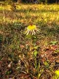 Droge bloem Stock Fotografie