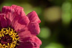 Droge bloem Royalty-vrije Stock Foto