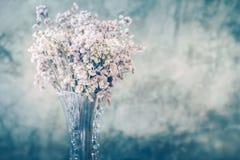 Droge bloem in lange en transparante vaas Stock Foto