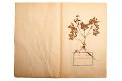 Droge bloem op oud, gegaan geel document stock afbeelding