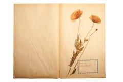 Droge bloem op oud, gegaan geel document royalty-vrije stock fotografie