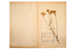 Droge bloem op oud, gegaan geel document stock fotografie