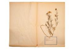 Droge bloem op oud, gegaan geel document royalty-vrije stock foto's