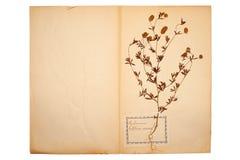 Droge bloem op oud, gegaan geel document stock afbeeldingen