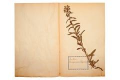Droge bloem op oud, gegaan geel document stock foto