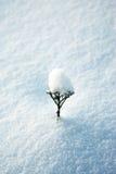 Droge bloem op sneeuw Stock Afbeeldingen