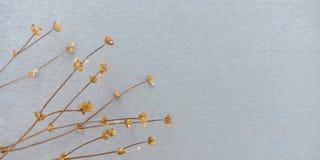 Droge bloemachtergrond stock fotografie