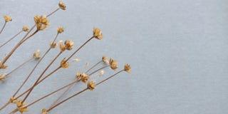 Droge bloemachtergrond royalty-vrije stock foto