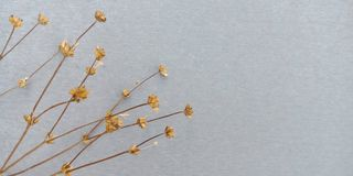 Droge bloemachtergrond royalty-vrije stock afbeeldingen