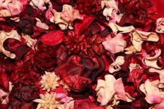 Droge bloembladeren Royalty-vrije Stock Fotografie