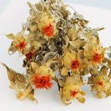 Droge bloemen Royalty-vrije Stock Afbeeldingen