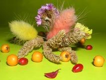 Droge bloemen Stock Foto's