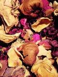 Droge bloemen Royalty-vrije Stock Afbeelding