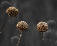 Droge bloemen bij prairierand Royalty-vrije Stock Foto's