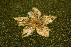 Droge bloemen die op het water drijven stock afbeeldingen