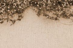 Droge bloemen op concrete vloer Stock Afbeelding