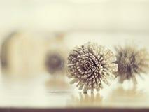 Droge bloemen op de houten lijst  (Samenstelling voor tekst) Royalty-vrije Stock Fotografie