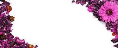 Droge bloemenbovenkant van mening, panorama Royalty-vrije Stock Afbeelding