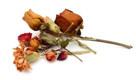 Droge bloemengift Royalty-vrije Stock Foto's