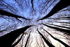 Droge bomen Royalty-vrije Stock Afbeelding
