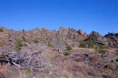 Droge bomen in de bergen stock afbeelding