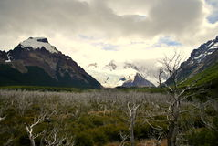 Droge bomen en sneeuwbergen Royalty-vrije Stock Foto