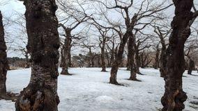 Droge bomen en takken met sneeuw behandelde grond Stock Afbeelding