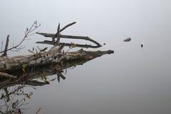 Droge boom in het water royalty-vrije stock fotografie