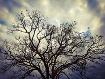 Droge boom met donkere kleuren, hemel met intense kleuren stock foto