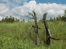 Droge boom op het gebied dichtbij het bos royalty-vrije stock afbeeldingen
