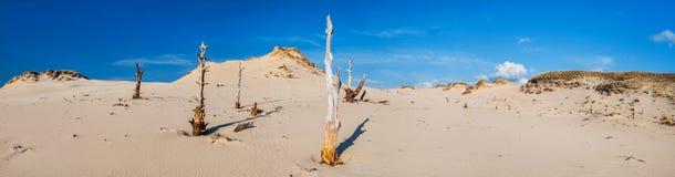 Droge boom op woestijn Royalty-vrije Stock Afbeelding
