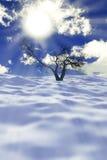 Droge boom in sneeuw Stock Afbeeldingen