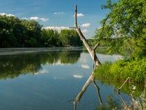Droge boombezinning aan de oppervlakte van water Stock Afbeelding