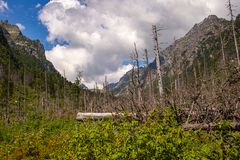 Droge boomboomstammen op de bergen royalty-vrije stock foto's