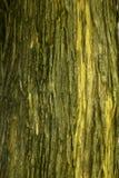 Droge boomschors op de boomstam stock fotografie
