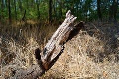 Droge boomstam bij de rand van het bos royalty-vrije stock afbeeldingen