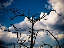 Droge boomtak tegen de hemel royalty-vrije stock afbeelding