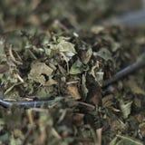 Droge braambessenbladeren royalty-vrije stock foto's