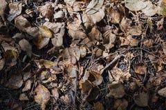 Droge bruine bladeren behandelde bosgrond onder zonlicht in autum Royalty-vrije Stock Fotografie