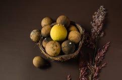 Droge citroenen op het midden van een kokosnoot stock afbeeldingen