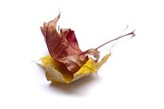 Droge de herfstbladeren Royalty-vrije Stock Foto's
