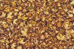 Droge de herfstbladeren als achtergrond Stock Foto