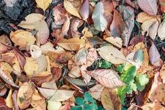 Droge de herfstbladeren in bruine tonen Close-up Achtergrond stock illustratie