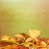 Droge de herfstbladeren die op de achtergrond liggen Stock Afbeeldingen