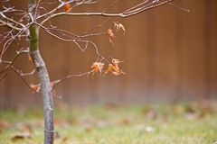 Droge de herfstbladeren op takken stock afbeelding